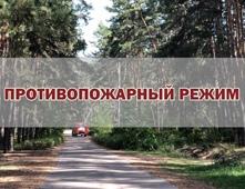 Игорь Артамонов: «Обеспечить сохранность лесов – общая задача органов власти и граждан»