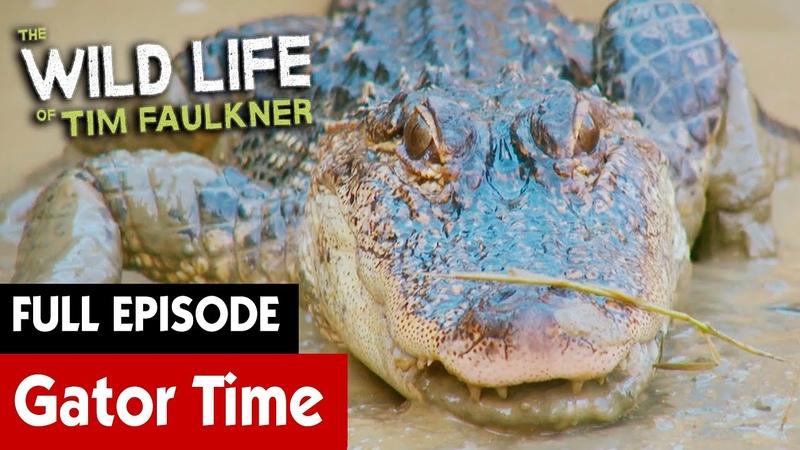Пачкаюсь с какими то аллигаторами Getting Muddy With Some Gators S2E18 The Wild Life of Tim Faulkner