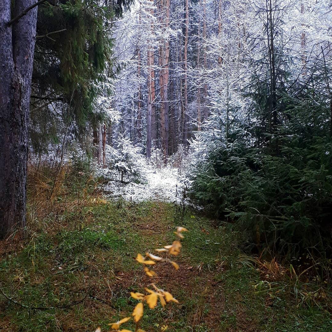 Встреча осени и зимы в лесу ( Пермский край, 16.10.2020)
