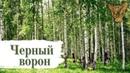 СКОЛОТ - Чёрный ворон (Official Video)