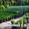 Питомник растений Сергея Миллера
