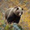 Медвежий Стан