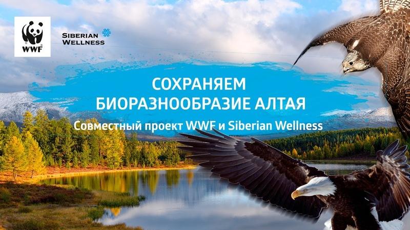 Как сохранить сокола балобана и степного орла в Алтае Саянском регионе