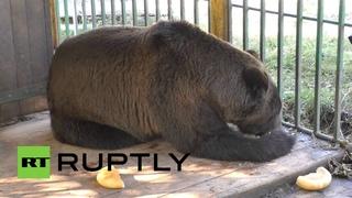 Ополченцы ДНР подкармливают брошенного в приюте для бездомных животных медведя