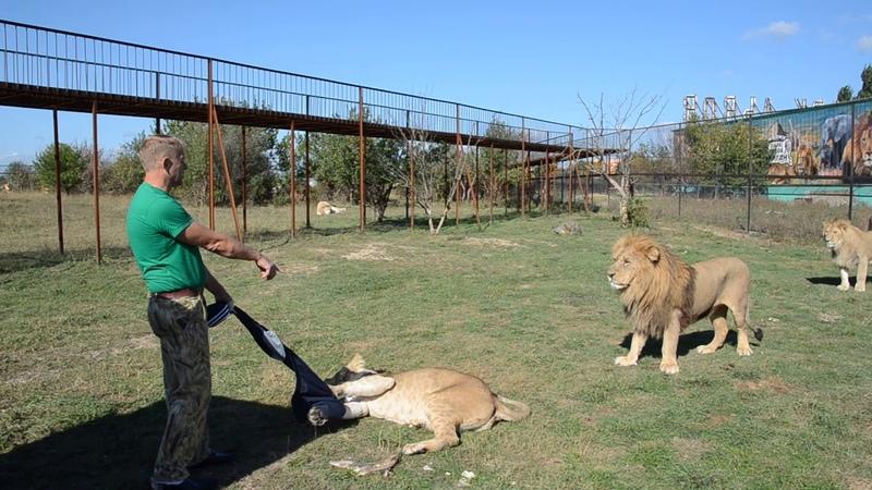 СМОТРЕТЬ ВСЕМ кто собирается в Саванну ко львам Лев Малыш наказывает Лейлу