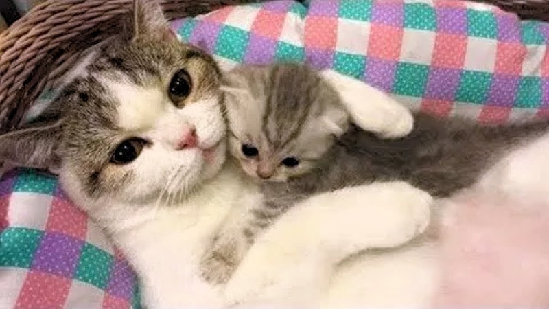 Funny Cats ✪ Mother cats protecting their cute kittens 81