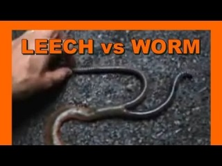 Japan Mountain Leech vs. Giant Earthworm - Real Japan Monsters  モ