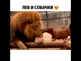 Настоящая дружба между животными!
